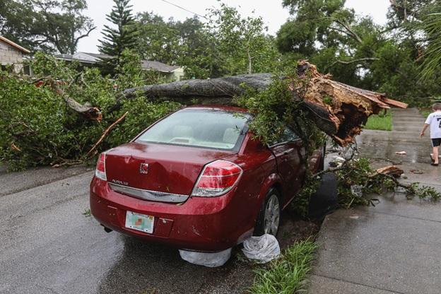 A broken tree on a car